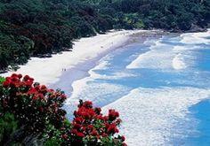 Whitianga and Mercury Bay New Zealand - travel information