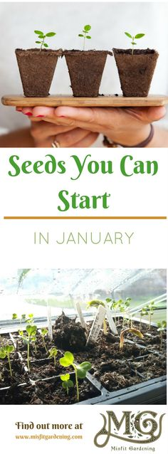 Seeds you can sow in January will help get your garden ahead in spring. Click to find out what you can sow or pin it for later