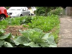 A very short adorable video featuring mostly kids talking about their front yard gardens. The idea is wonderful!