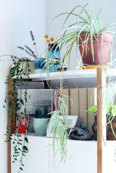 Urban jungle green to decorate shelf   www.boomboomshop.fr