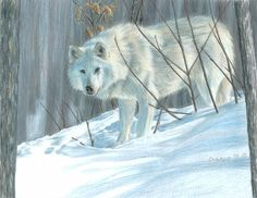 Trademark Fine Art 'Winter Wolf In Landscape' Canvas Art by Carla Kurt, Size: 35 x Blue Winter Wolves, Beautiful Wolves, Color Pencil Art, Wildlife Art, Art Reproductions, Canvas Art, Fine Art, Pencil Drawings, Beautiful Drawings