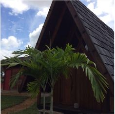 Feel free to visit Houttuyn Wellness River Resort. Paramaribo,Suriname. #wellness# #suriname# #green#