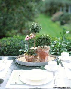 Topiaries on a table. Putting them on a mirror would be interesting too.