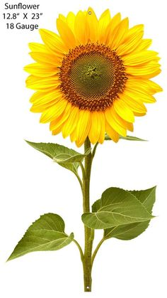 Flowers Discover Sunflower Laser Cut Out Metal Steel Sign x 22 inches American Made Retro Wall Decor Art RG Sunflower Png, Small Sunflower, Sunflower Pictures, Country Wall Decor, Wall Art Decor, Sunflower Illustration, Sunflower Sketches, Mellow Yellow, Flower Delivery