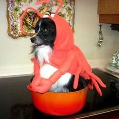 I want Jett to be a lobster next Halloween. Too cute.
