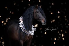 Beautiful Horses, Animals Beautiful, Christmas Horses, Advent Season, Background Drawing, Winter Background, Photo Link, Horse Photos, Wallpaper Iphone Cute