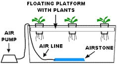 Hydroponic systems come in multiple shapes and sizes. How do you like to grow with hydroponics? Do you like bare root or a type of hydroponic media?