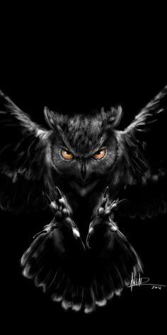 Owl Wallpaper Iphone, Cats Wallpaper, Tier Wallpaper, Animal Wallpaper, Owl Eye Tattoo, Owl Tattoo Drawings, Owl Photos, Owl Pictures, Beautiful Owl
