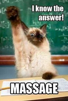 24 Best Funny animal Quotes and Funny Memes. Enjoy and have fun! 25 Best Funny animal Quotes and Funny Memes Funny Animal Quotes, Funny Animal Pictures, Cute Funny Animals, Funny Cute, Cute Cats, Animal Pics, Cat Quotes, Funniest Animals, Top Funny