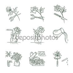 Флористические векторные иконки — стоковая иллюстрация #108713168