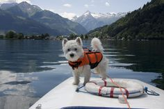 Dogs in life vests are definitely the cutest thing ever