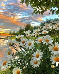 Beautiful Nature Pictures, Nature Photos, Beautiful Landscapes, Beautiful Gardens, Beautiful Flowers, Nature Photography Flowers, Flowers Nature, Landscape Photography, Nature Nature