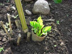 7 konyhai hulladék kerti felhasználása - Ezermester 2011/4