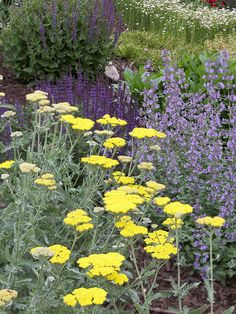 Yellow yarrow, purple catmint, and deep-violet 'May Night' salvia. Butterflies like them and deer don't.
