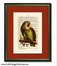 GREEN PARROT   Dictionary art Vintage art by littlevintagechest, $7.99