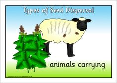 Types of seed dispersal posters (SB3173) - SparkleBox