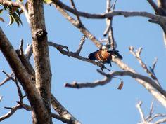 Gorrión en habitat (Valle de San Andrés, El Salvador)