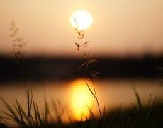 zonlicht, gras, zonsondergang