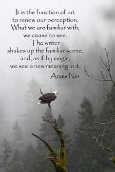 """""""It is the function of art to renew our perception.""""  -- Anais Nin -- On image of eagle in Washington state by Dr. Joseph T. McGinn --  Explore artistic wanderlust at http://www.examiner.com/article/artistic-wanderlust-journey-through-words-and-images"""
