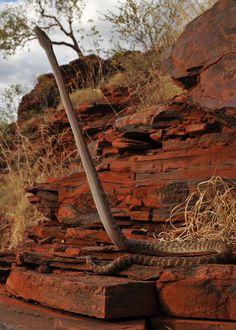 Stimson's Python (Antaresia stimsoni) by reptile street photographer, via Flickr amazing shot #snakes #reptiles #topanimals