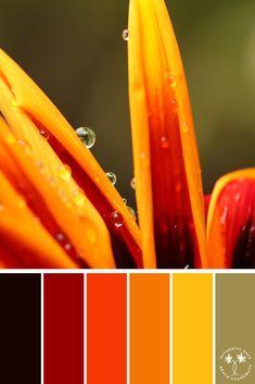 Bright Florals | Bright Color Palette | Autumn Shades | Color Palette Inspiration