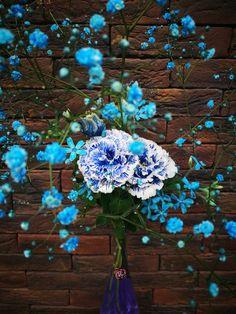新作の花。 アンハロッズ。