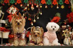 ☺︎ プティシアンさんの撮影ブース🎁 天井高くて広い空間のカフェでまったりティータイム✨ りこちゃん真っ白に浮き立つ😆✨ まろりこちゃんはトリミング後でお疲れ気味 なかなか上手く撮れなくてごめんなさい💦 ・  連投しちゃってます🙏 ・ ・ ・ #ふゆの日withkiss #町田市 #トナカイ #ツリー #クリスマス #男の娘 #宝物 #YorkshireTerrier #yorkie #개 #dog #愛犬 #요키 #おやばか部 #cute #ヨーキー #ヨークシャーテリア #犬のいる生活#thebestyorkies#DIESELminniephoto #east_dog_japan#わんすたぐらむ #todayswanko #bestfriends_dogs #total_dogs #애완동물 #yorkie_feature #inustagram #7pets_1day #ヨーキー倶楽部
