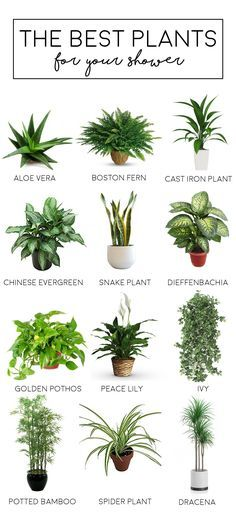Best plants to have bathroom or shower