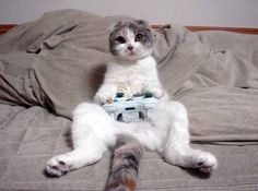 Crazy Cat Playing Games    #Funny #Cats