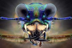 Incredible creatures up-close - Yudy Sauw/Solent News/REX