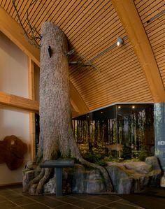 Dieses Weisstannendiorama wurde von uns im Haus der Natur Feldberg im Schwarzwald errichtet. Der baum ist aus Styropor geschnitzt und mit einer Spezialmasse beschichtet. Ebenso der Felsenbau. Die Pflanzen sind in eigener Produktion künstlich hergestellt. Der Rehbock ist von Hartmut Schmiese präpariert worden.