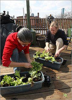 How to plant an urban veggie garden