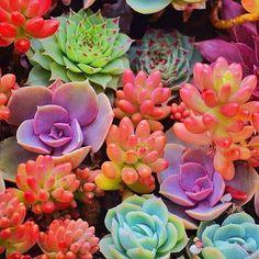 Colour me crazy Wednesday.