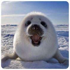 Funny seal!  #Padgram