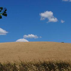 Love @laura.valle.ambrata #sky #nuvole #grano #summer