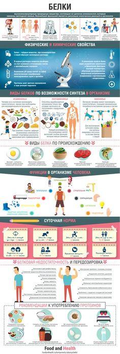 Инфографика белки