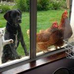 25 kuvaa lemmikeistä, jotka haluavat päästä epätoivoisesti sisälle