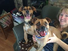 His family foster failed on 8.9.14! Congrats and welcome to the club! Pugsley! Our beagle/pug mix (the one in front) arrived to FPO today. He's good with other dogs, kids, and we think cats. Watch for more info! @FPOPets on twitter/instagram or on FB