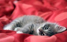 Katze mit Decke