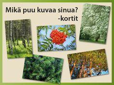 Mikä puu kuvaa sinua? -korteissa on puiden kuvia ja sekä kuvaus kyseisen puun valinneesta ihmisestä. Korttien avulla ryhmä voi tutustua toisiinsa ja samalla kohottaa tunnelmaa. #kevät #puu #horoskooppi #luonto #tulostettava #ryhmätoiminta #itsetuntemus #viriketoiminta #hauskanpito #nostatus Nature Crafts, Forest Animals, Science And Nature, Special Education, Teaching, Cards, Finnish Language, Languages, Woodland Creatures