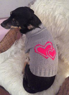 Одежа для собак – это не роскошь, а крайняя необходимость в прохладное время года! Хотя, кого я ...