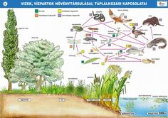 Biology, Parenting, Teaching, Education, Photo And Video, Water, Plants, Ha, Infographics