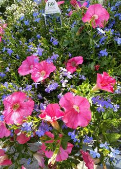 Hot pink petunias and cool blue lobelia are a winning combination for annual containers. Learn more about keeping annuals looking fresh and colorful all season long in The Home Depot's Caring for Annuals Project Guide.