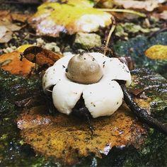 #champignons #foret #automne #bzh #bretagne #bretagnetourisme #champignons
