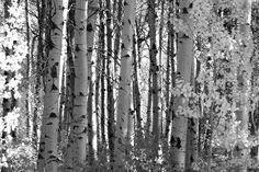 Cascade Loop - Fototapeten & Tapeten - Photowall
