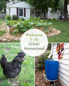 urban gardening - A Tour of My Urban Homestead Homestead Farm, Homestead Survival, Homestead Layout, Homestead Living, Future Farms, Modern Homesteading, Backyard Farming, Backyard Chickens, Mini Farm