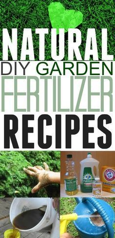This woman has some great garden fertilizer ideas in this post! Love that these are natural and I can make them at home!