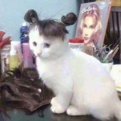 Isn't cute? http://ift.tt/2svxr3M