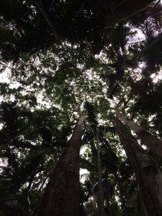 the Uki trees in Australia touch the sky