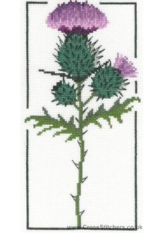 cross stitch thistle | Floral - Thistle Cross Stitch Kit from Classic Embroidery